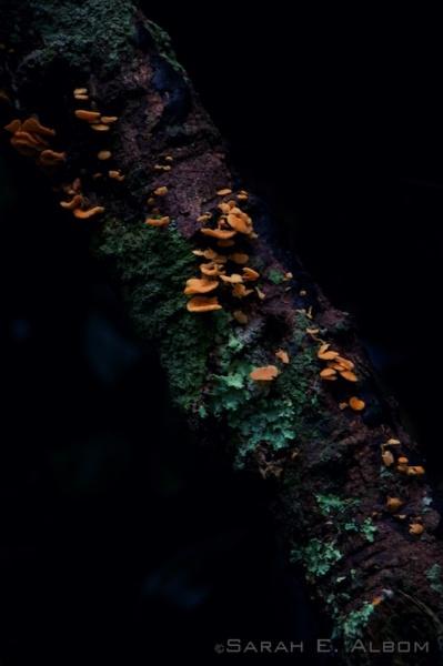 Fungus on a tree, Shakespear Park, New Zealand - Photograph copyright Sarah E. Albom 2015