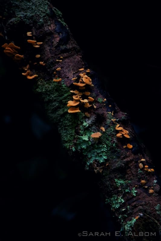 Fungus on a tree, Shakespear Park, New Zealand - Photograph copyright Sarah E. Albom 2015; for more photos of 2015 photo highlights, visit the blog