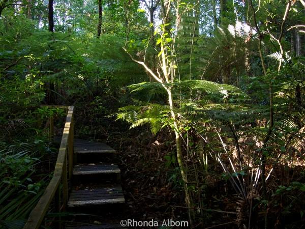 The boardwalk runs throughout Parry Kauri Park, Warkworth, New Zealand