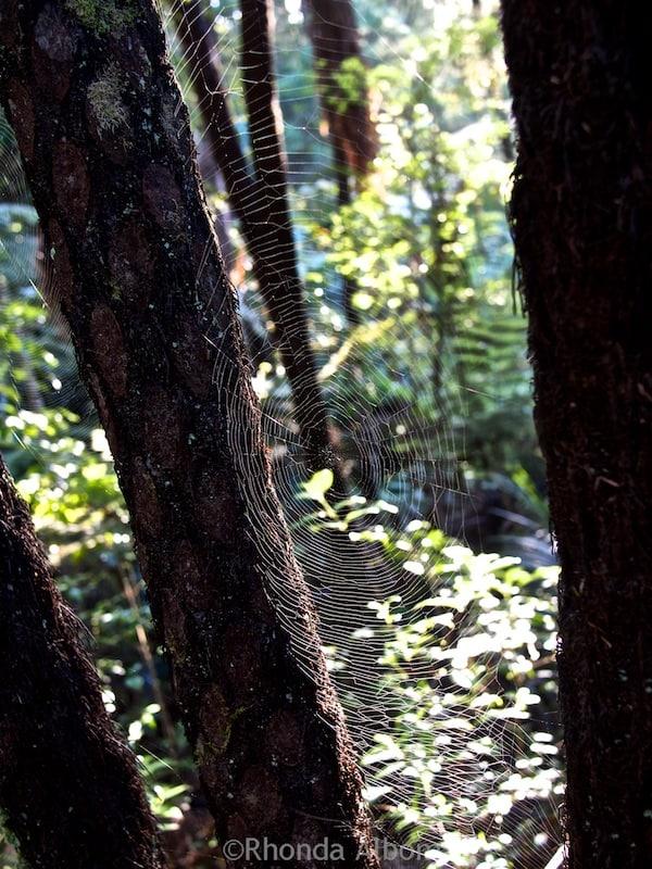 Spider web in Warkworth, New Zealand