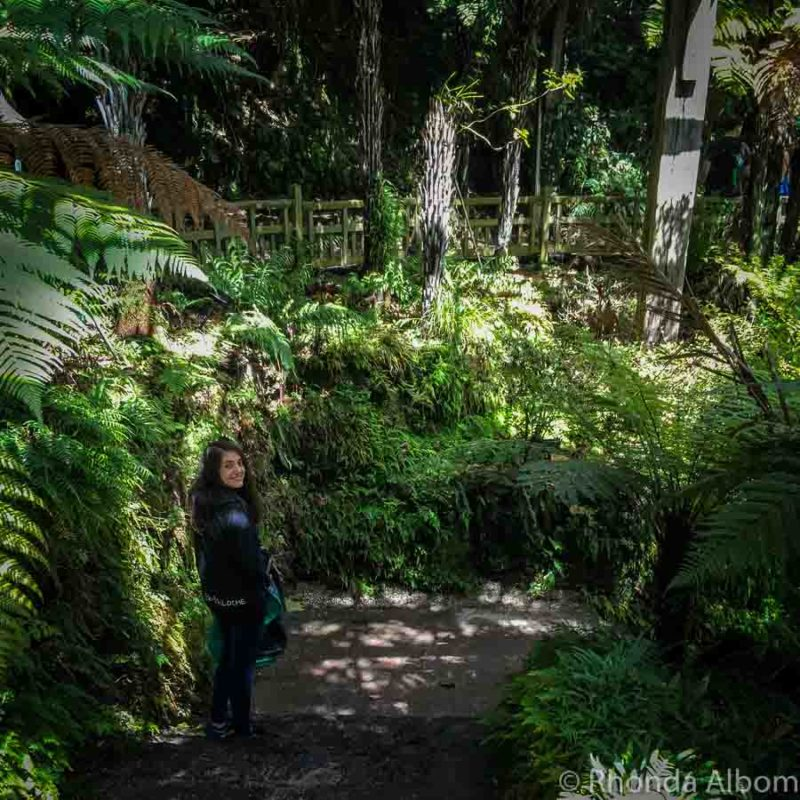 Wintergardens Fernery, Auckland New Zealand