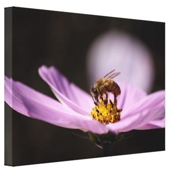 Bee on Flower Canvas Print by Sarah Albom Photography