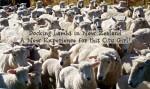 Docking Lambs in New Zealand