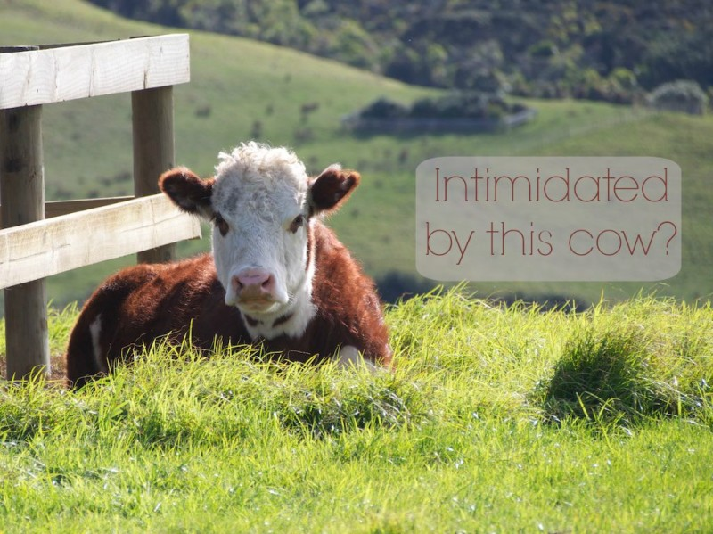 Intimidated by Cows I Climb Over an Electric Fence