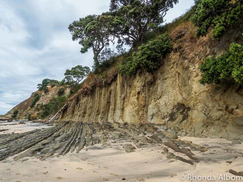 Cliffs and foreshore at Pink Beach in Shakespear Park Auckland New Zealand