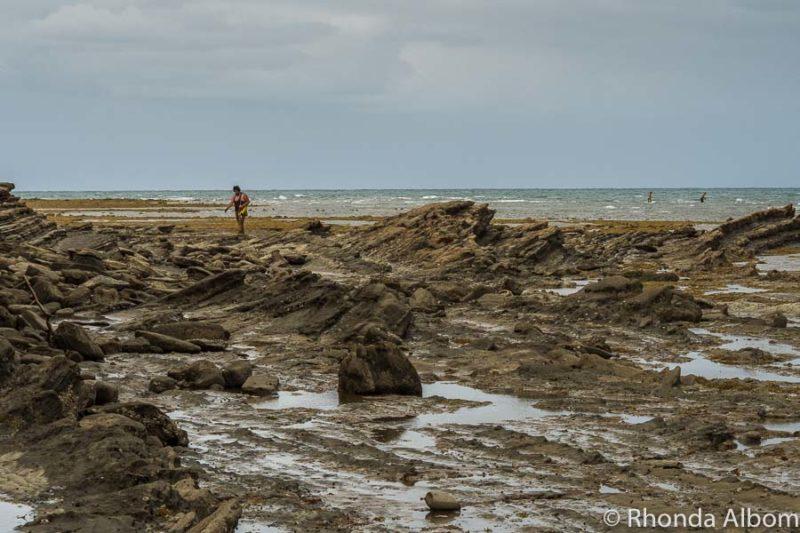 Pink Beach coastal walk, Auckland New Zealand