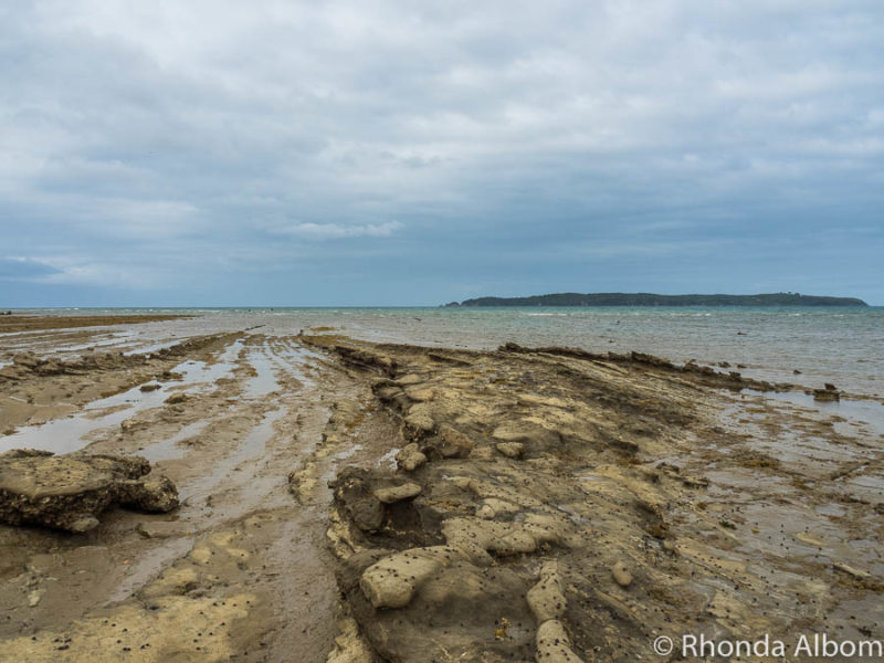 Looking out to sea on Pink Beach in Shakespear Park Auckland New Zealand