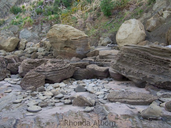 Interesting Rock Formations on the coast at Shakespear Park Auckland New Zealand