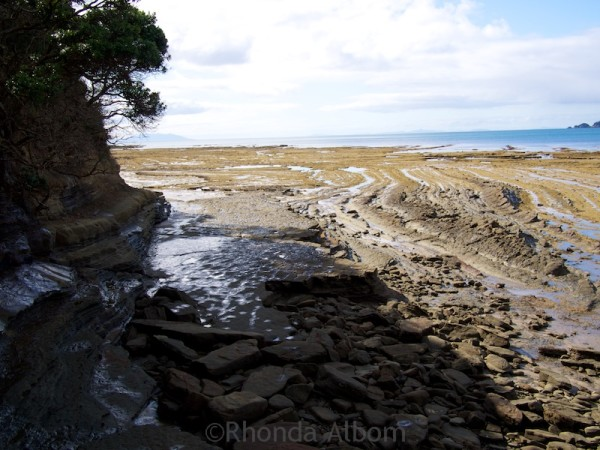 The bottom of the steps at Pink Beach at low tide Shakespear Park Auckland New Zealand