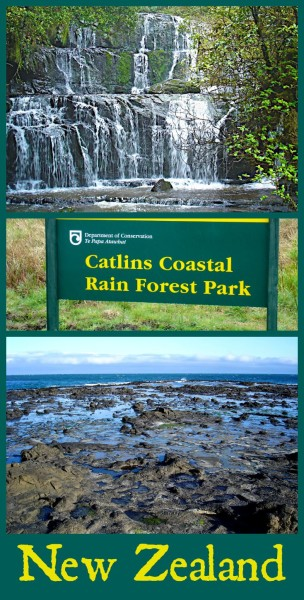Catlins Coastal Rain Forest Park on the South Island of New Zealand