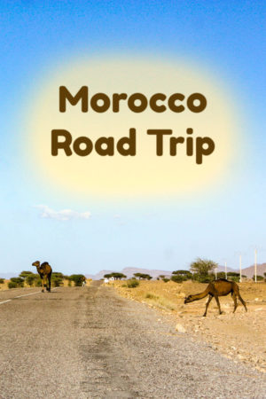 Camels on the road is one of the many sites in a Moroccan road trip.