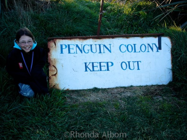 Penguin colony in the Catlins the southern region of New Zealand's mainland