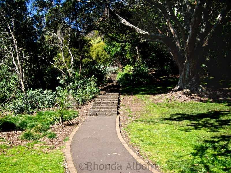 Path up extinct Mount Eden Volcano, Auckland New Zealand