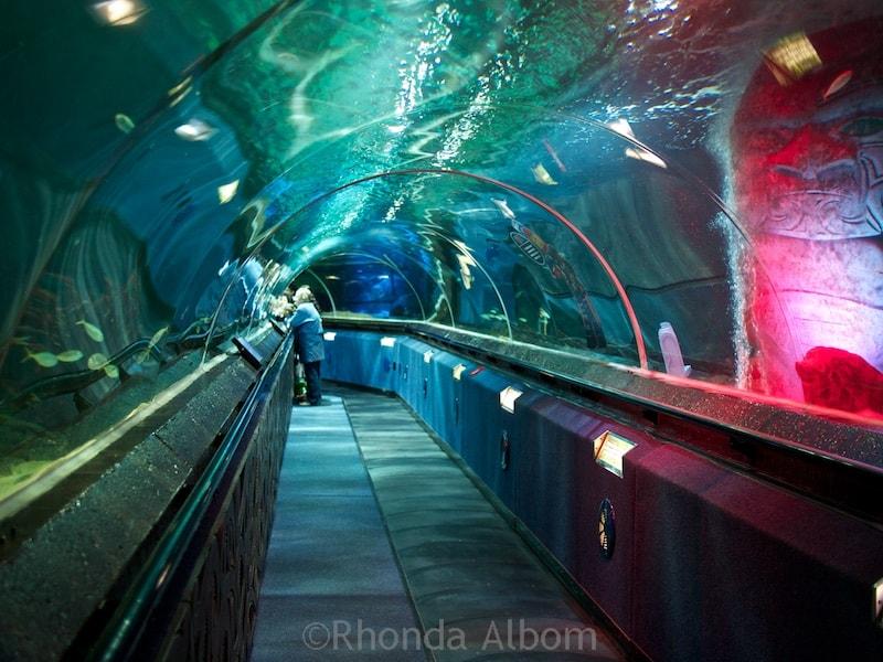 Shark tunnel at Kelly Tarlton's Sea Life Aquarium in Auckland New Zealand