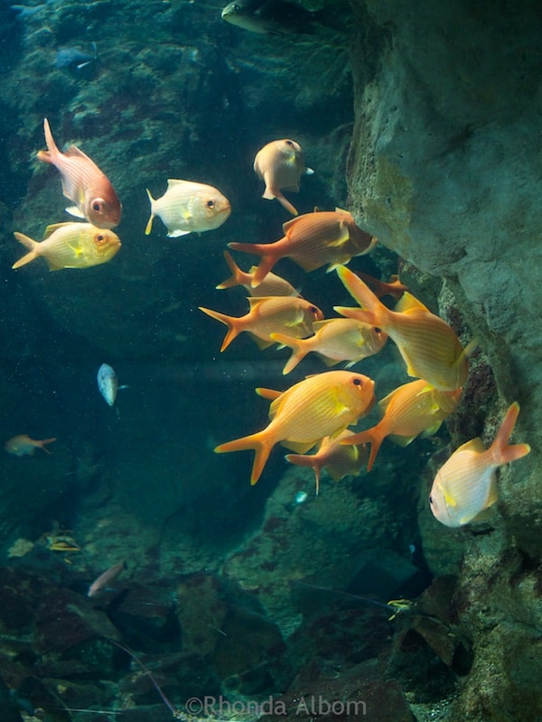 Fish Gallery at Kelly Tarlton's Sea Life Aquarium in Auckland New Zealand