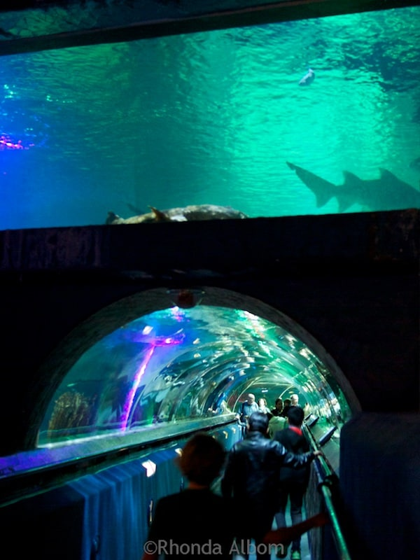 Shark tunnel at Kelly Tarlton's Sea Life Aquarium in Auckland New Zealand