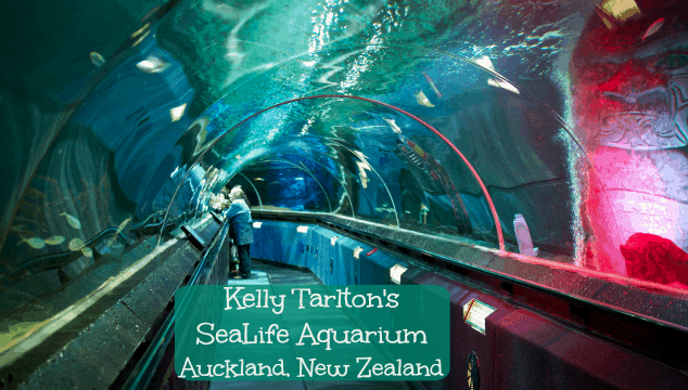 Kelly Tarltons SeaLife Aquarium