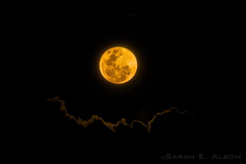 'Supermoon' by ©2015 Sarah E. Albom. Taken in Auckland, New Zealand of the September 2015 supermoon.
