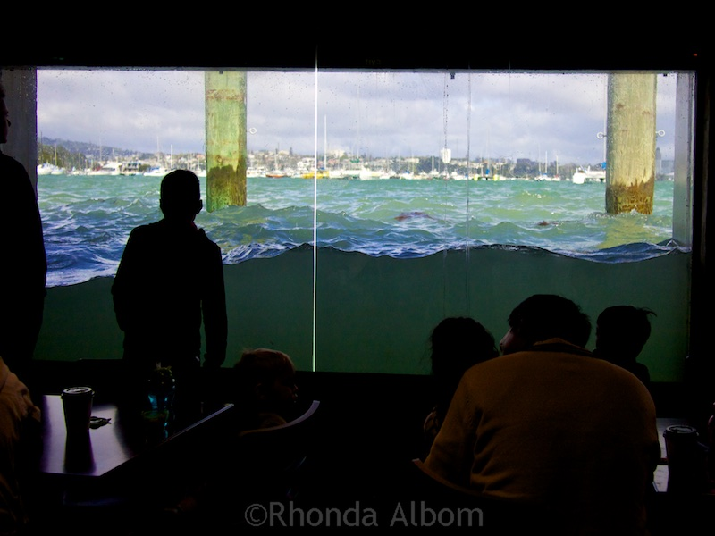 You can see the ocean splashing up against the glass at the Cafe in Kelly Tarlton's Sea Life Aquarium in Auckland New Zealand