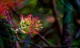 Royal Botanic Gardens of Sydney Australia
