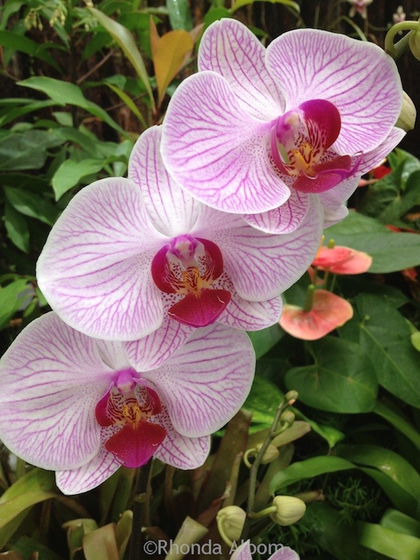 Wellington's Botanic Garden