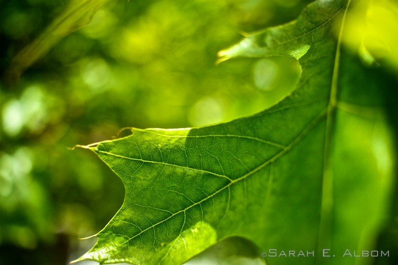 Leaves, Kapiti Coast in Wellington, New Zealand. Copyright Sarah E. Albom 2015; for more photos of Wellington, visit the blog