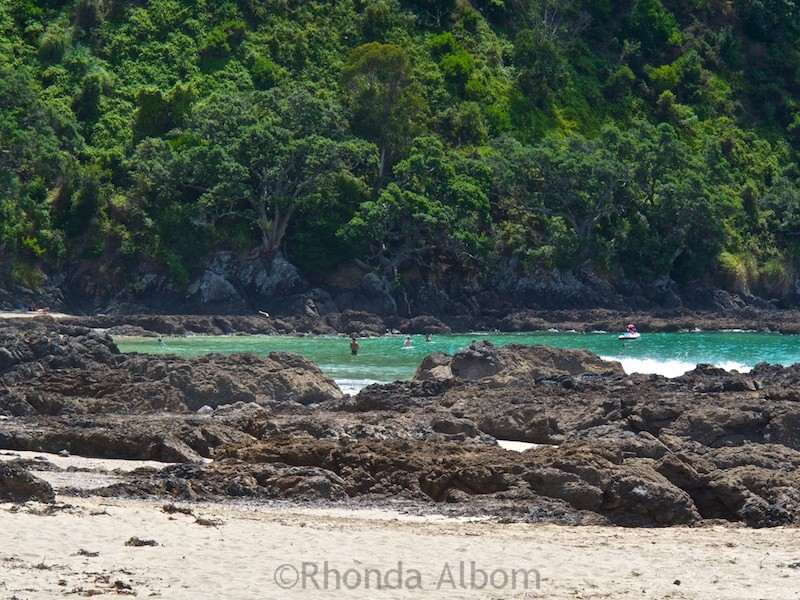 Called Nudie Beach by the locals it is one of many Waiheke Island beaches near Auckland New Zealand