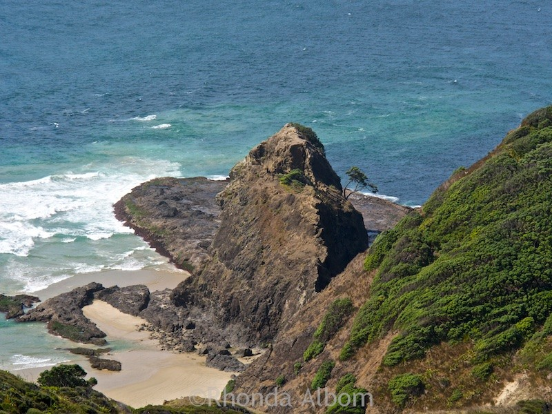 A lone tree with a spiritual story spotted on the rocks from the walking path to Cape Reinga on the North Island of New Zealand