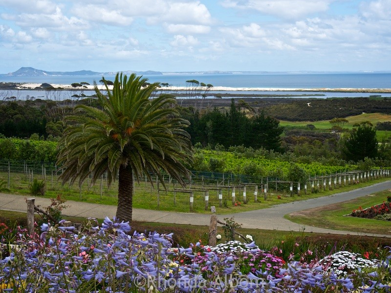 View from the Cellar Door at the Karikari Estate Winery is the most elegant of the Far North restaurants in New Zealand