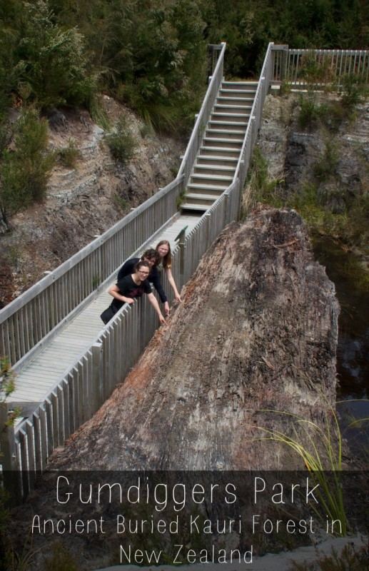 Ancient kauri log estimated to be 100k-150K old at Gumdiggers Park in Northland New Zealand