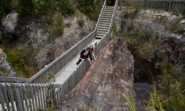 Gumdiggers Park: A New Zealand Wonder Worth Visiting