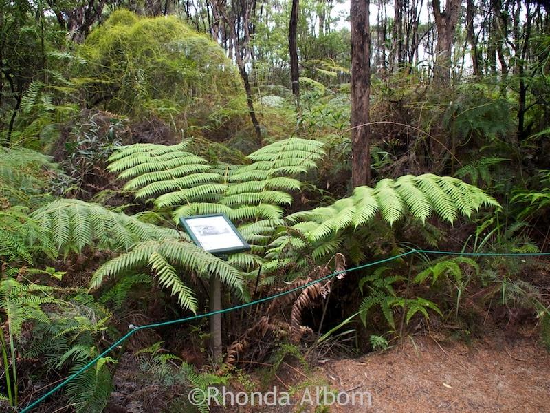Gumdiggers Park in Northland New Zealand