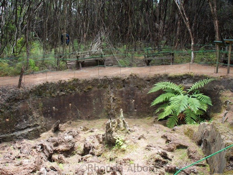 Huge ancient kauri stump estimated to be 100k-150K old at Gumdiggers Park in Northland New Zealand