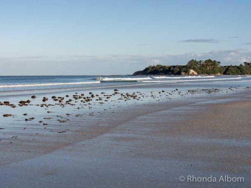 White silica sand at Rarawa Beach New Zealand