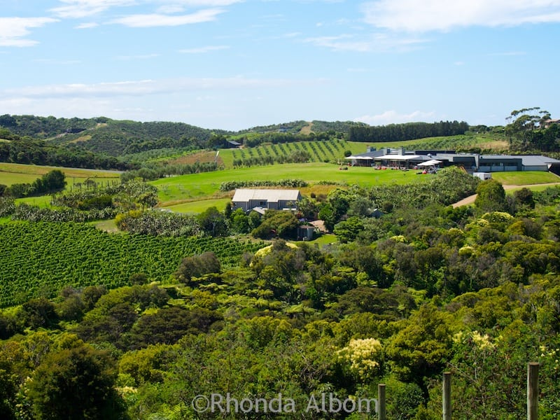 Looking down on Cable Bay Vineyard on Waiheke Island outside of Auckland New Zealand