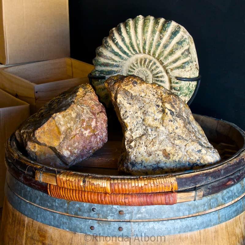 155 million year old rock found on Jurassic Ridge Vineyard on Waiheke Island outside of Auckland New Zealand