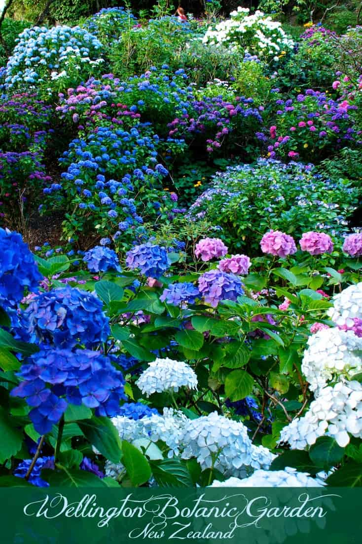 Flowers at the Wellington Botanic Garden in Wellington New Zealand ©Rhonda Albom 2016. \