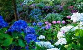Colourful Photos from Wellington Botanic Garden