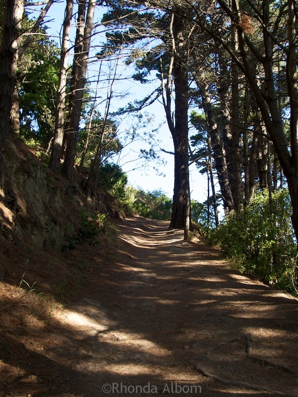 Hiking path on Mount Victoria in Wellington New Zealand