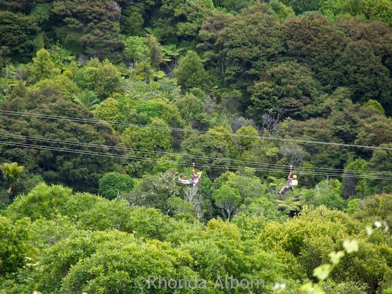 A zipline over the forest canopy on Waiheke Island