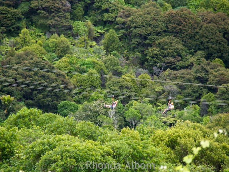 Zipline Waiheke - fly over the forest canopy on Waiheke Island just off of Auckland New Zealand