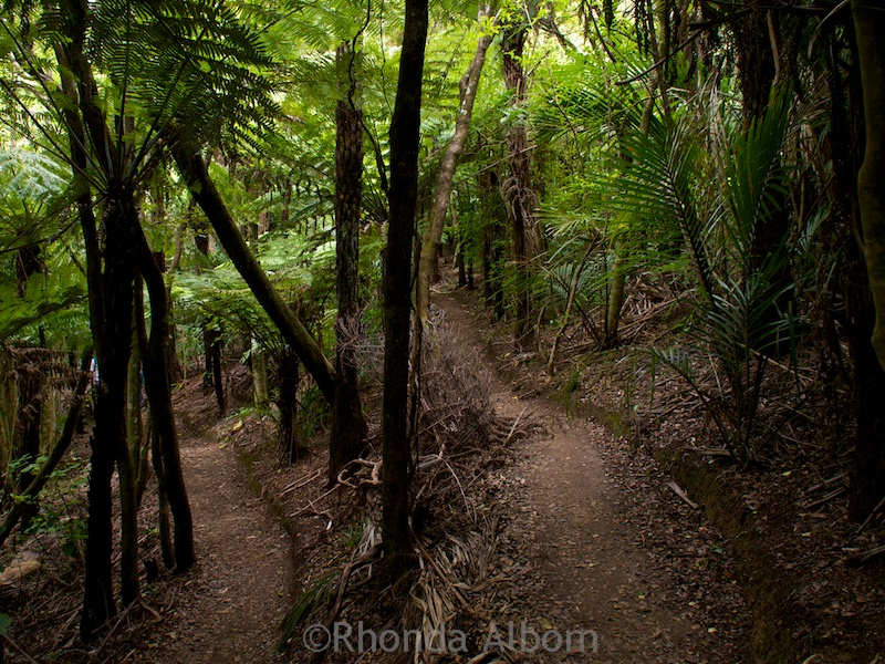 Hiking on Waiheke Island, New Zealand