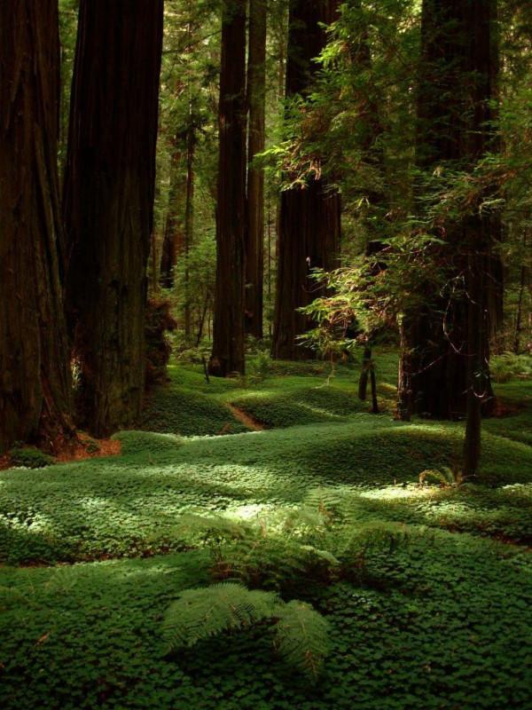 Redwood coast near the Avenue of the Giants. Photo by Redwood Coast - USA Adventure