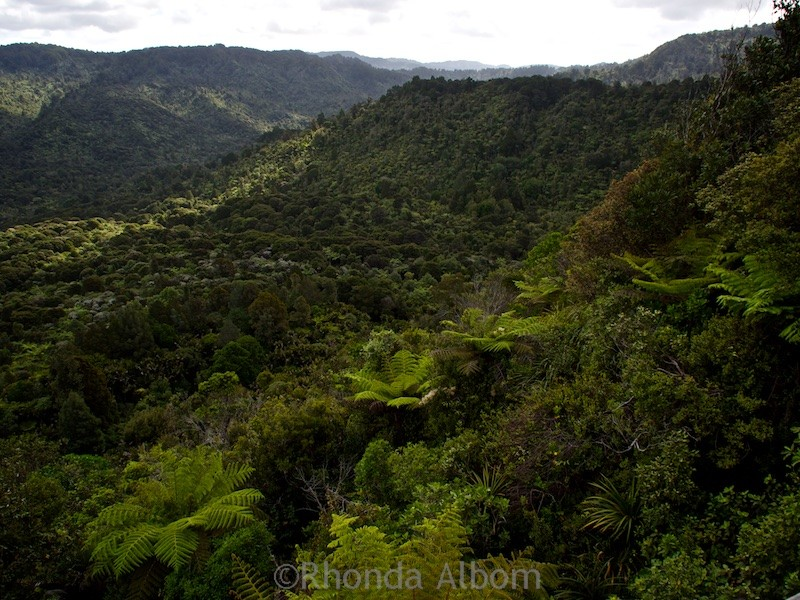 Hiking in the Waitakere Ranges in Auckland New Zealand