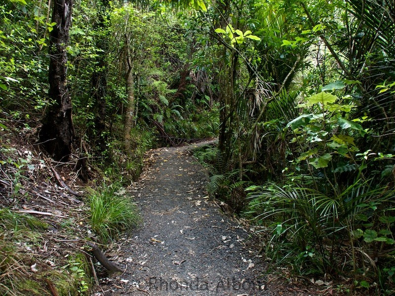 The start of the Hillary trail at the Arataki Visitor Centre in the Waitakere Ranges, Auckland, New Zealand