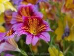 Flowers – #AtoZ Postcards of New Zealand