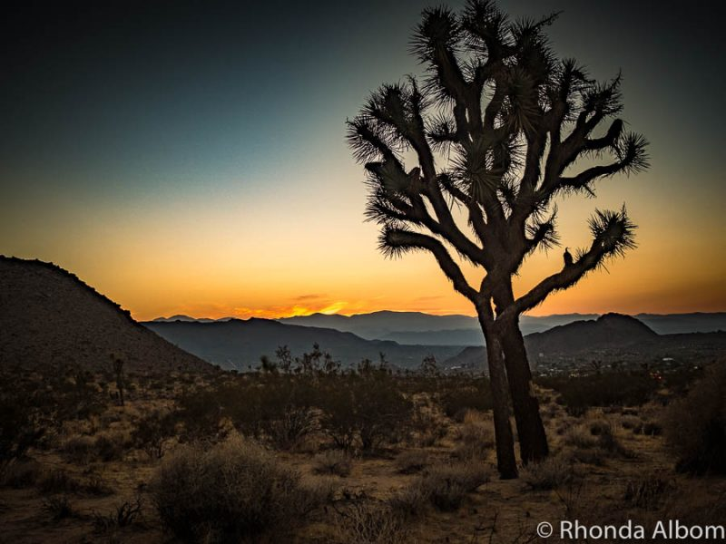 Joshua Tree National Park at sunset on our USA adventure