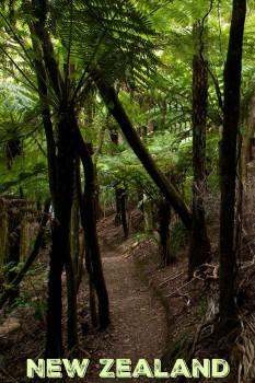 Hiking on Waiheke Island, New Zealand
