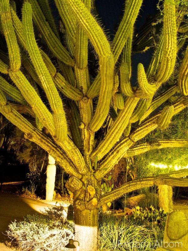 Desert Botanical Garden in Phoenix Arizona
