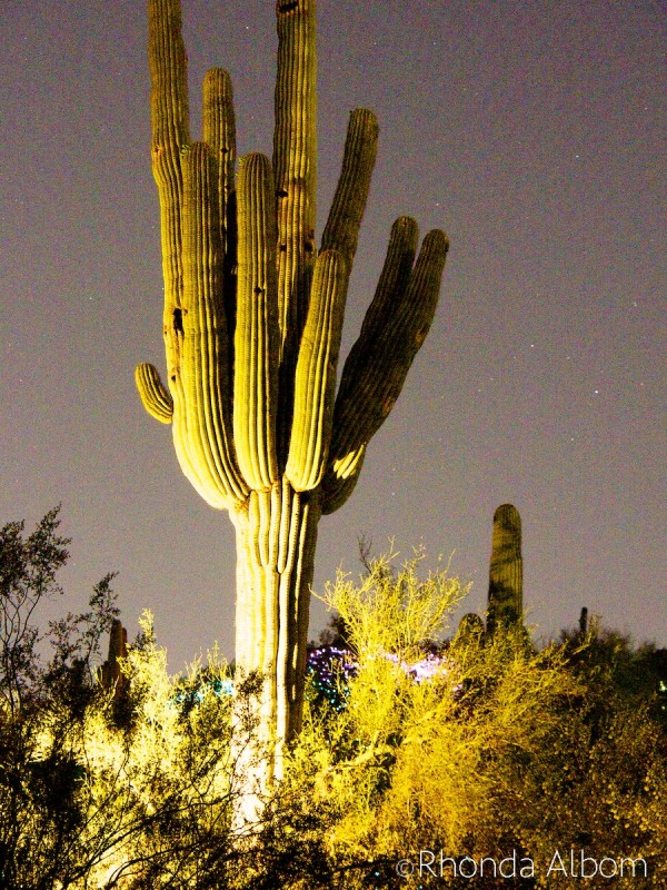 Desert Botanical Garden in Phoenix Arizona